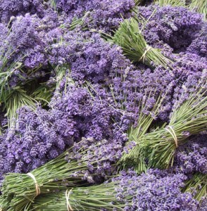 lavender-294x300