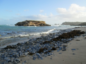 IMG_2348 Shelly Beach, Mt Gambier